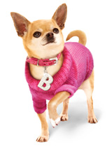 Bruiser's Outfit - Pink Sweater / Diamante Collar & Lead Set - The Pink Knitted Turtle Neck Sweater and Crocodile Pink Collar are both worn by Bruiser the Chihuahua in Legally Blonde The Musical currently touring the UK and Ireland and coming to a town near you soon. Give your pup star quality and save when you buy both together!<br /><br />Bruiser's Pink Knitt...