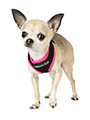 Active Mesh Neon Pink Harness