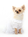 Bride Wedding Dress with Veil